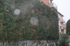Malattia delle piante-1