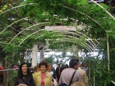 Strutture per sostegno piante rampicanti